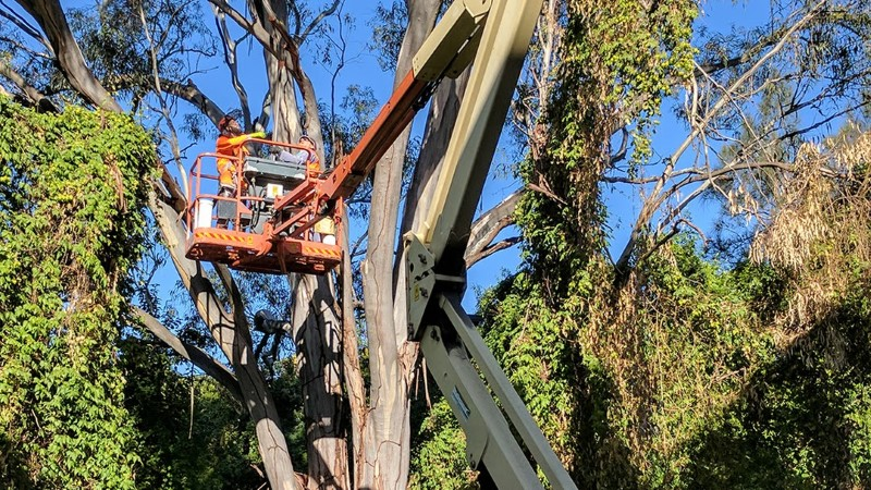 tree removal Norwood Payneham And St Peters Council use of crane