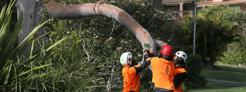 tree removal Pittwater council tree services workers