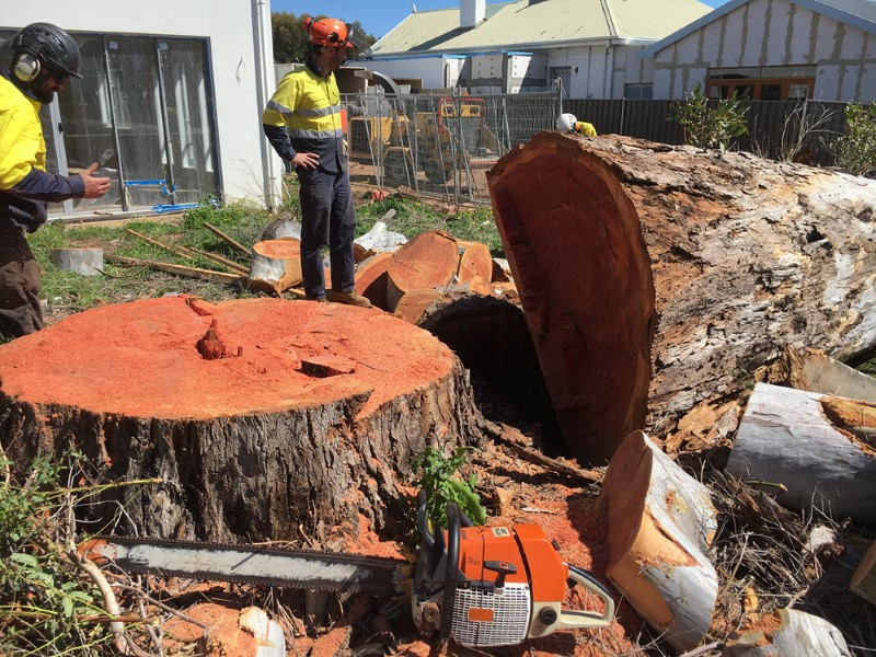 tree removal Port Adelaide Enfield council tree services at a home