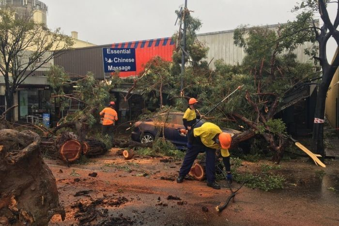 tree removal Port Adelaide Enfield council tree services emergency work