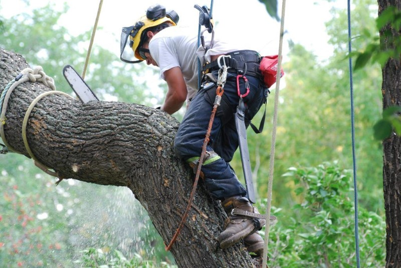 tree removal Sydney Council Man using chainsaw on a tree