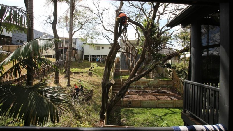tree removal The Hills Shire council man cutting a tree