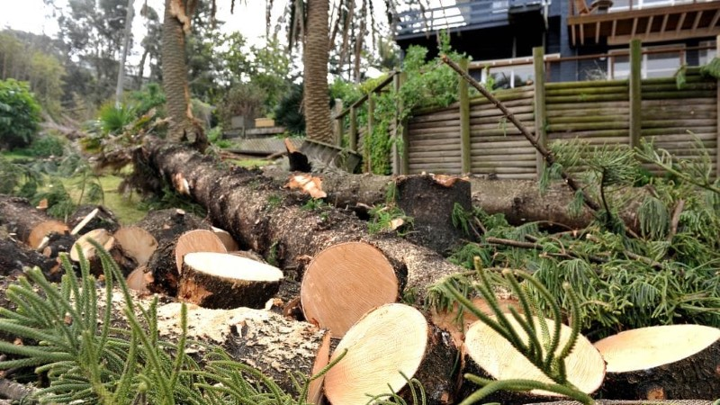 tree removal The Shire Hills council cut trees
