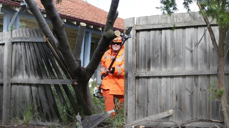 tree removal Unley council man removing trees in a home