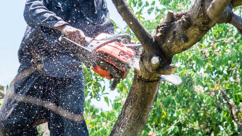 tree removal adelaide city council man using a power saw