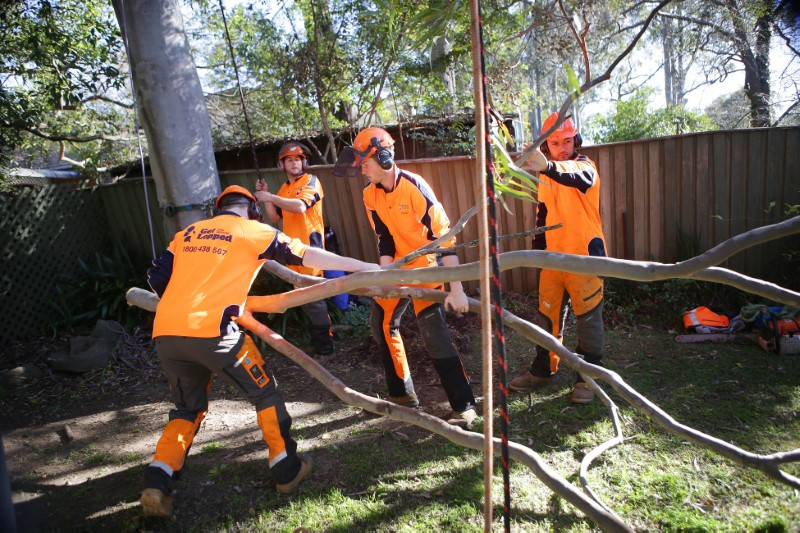 tree removal campbelltown council tree services