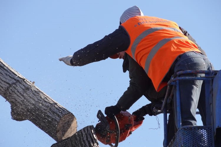 tree removal canterbury bankstown tree services