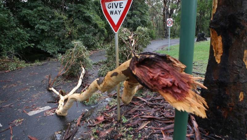 tree removal hurstville city council fallen tree