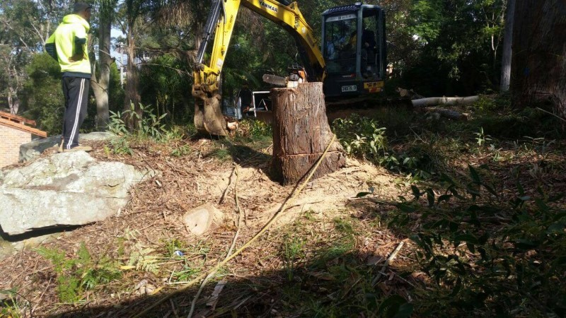 tree removal hurstville council machine removing tree