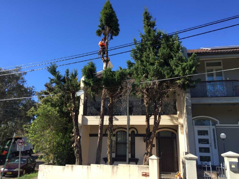 tree removal marrickville council man on a tall tree