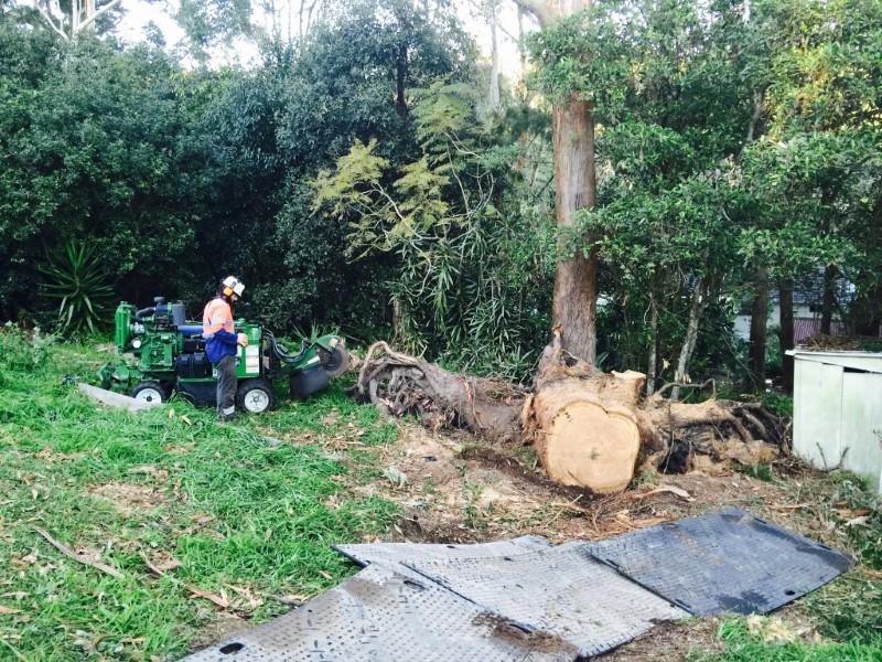 tree removal mosman council arborist removing tree