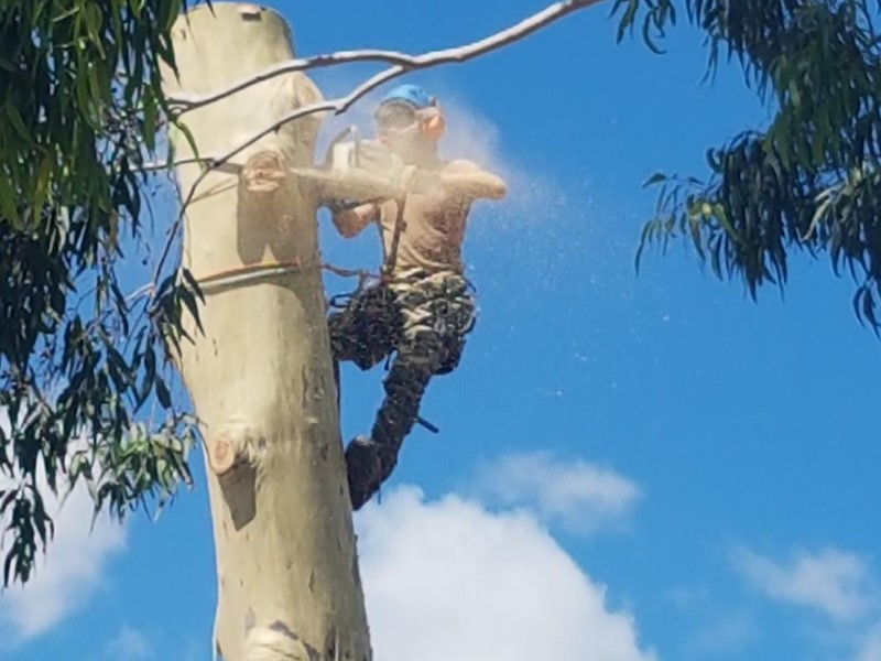 tree removal prospect council tree expert on a tall tree