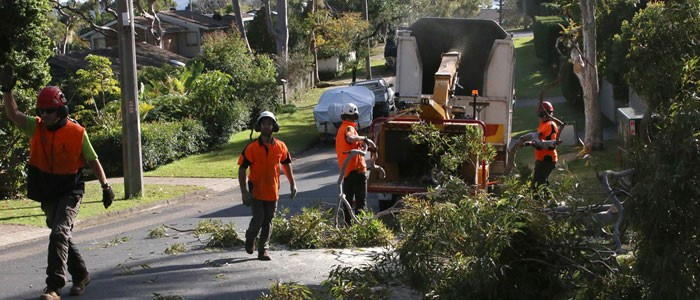 tree removal warringah council tree services