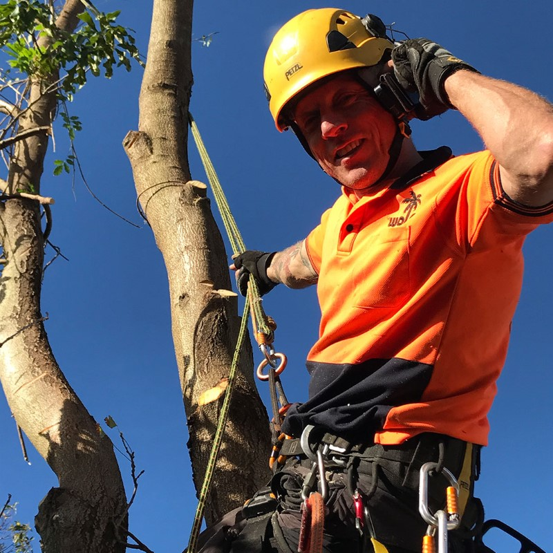 tree removal waverley council tree worker