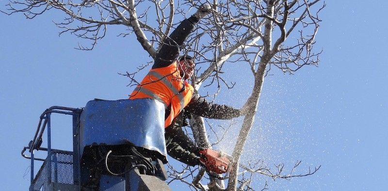 tree removal waverley council tree workers removing trees
