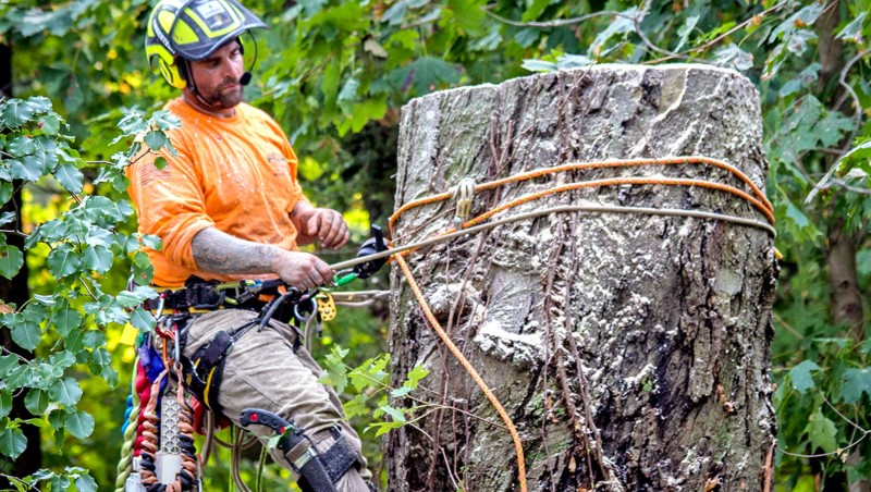 tree removal west torren tree remover