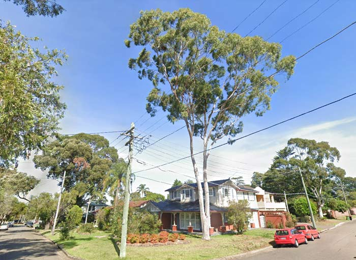 Removal of Eucalytus tree case study - Picnic Point