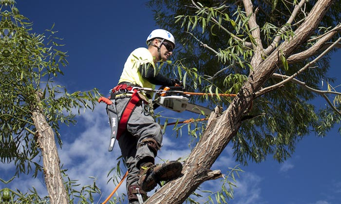 arborist-removing-a-tree-in-vic