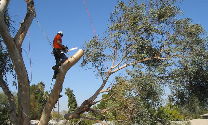 tree-removal-by-arborist-glen-eira-council-area