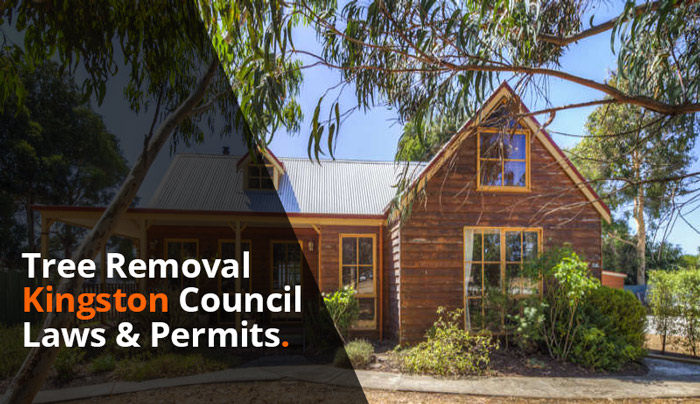 tree-removal-kingston-council-laws-and-permits