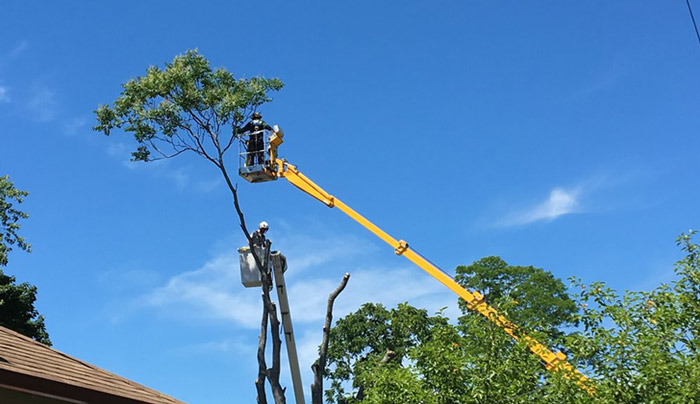 tree-removal-using-ewp-in-vic