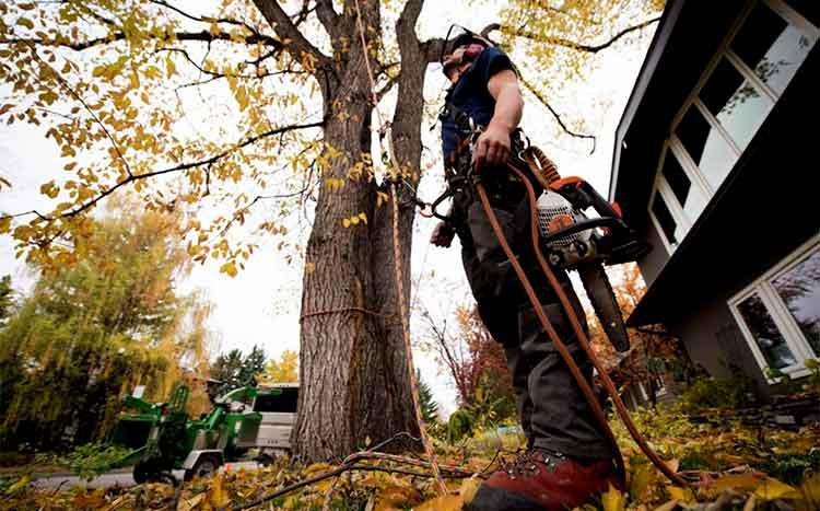 remove trees